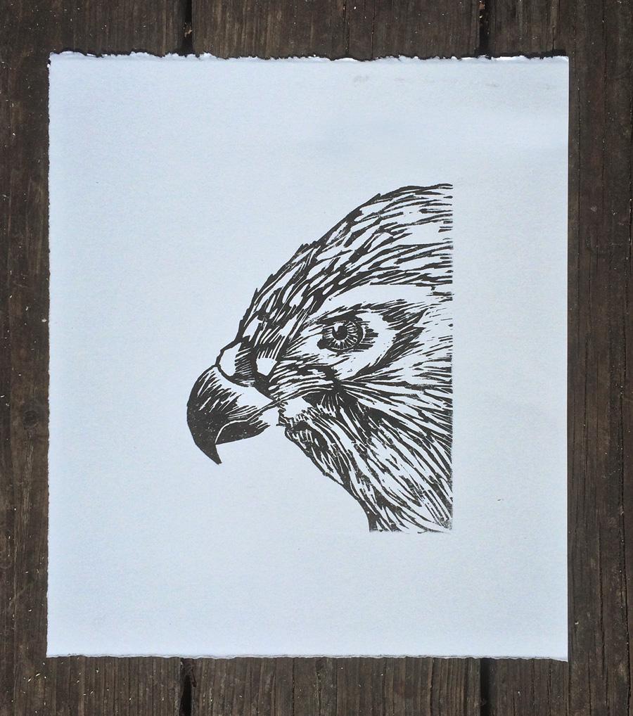 Hawk woodcut print
